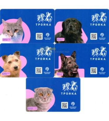 Карты 2020 набор 5 карт Кошки и собаки Двери не закрываются